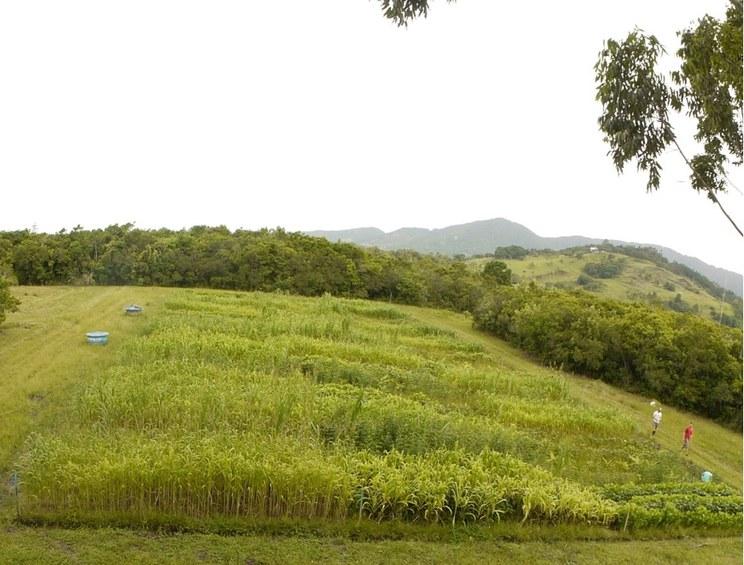 Foto mostra do alto o campo onde foram realizados os experimentos da tese.