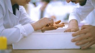 Foto em plano fechado de duas mãos inspecionando algo sobre uma bandeja plástica branca, comumente utilizada em laboratórios