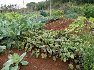 Foto mostra uma horta na qual são cultivados diversas variedades de hortaliças.